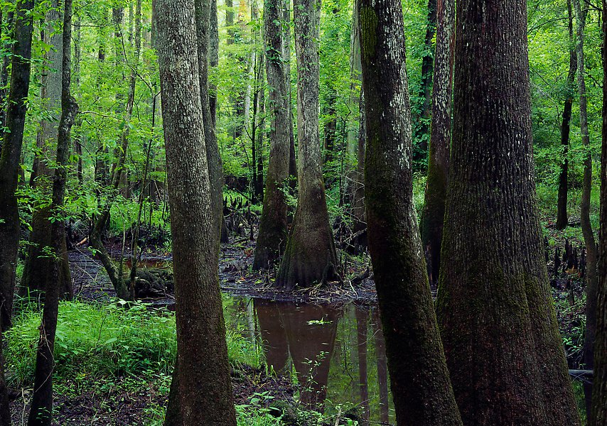 Congaree National Park.  ()