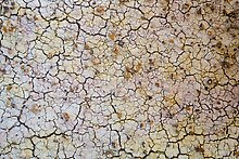 Cracks in yellow fossil soil. Badlands National Park.  ( )