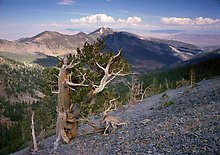 Great Basin National Park.  ( )