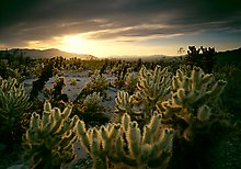 Joshua Tree National Park.  ( )