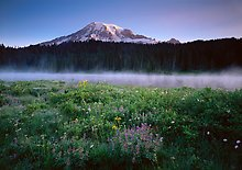 Mount Rainier National Park.  ( )