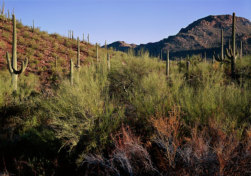 Saguaro National Park.  ()
