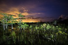Everglades National Park.  ( )