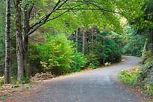 Carriage road, Acadia National Park.  ( )