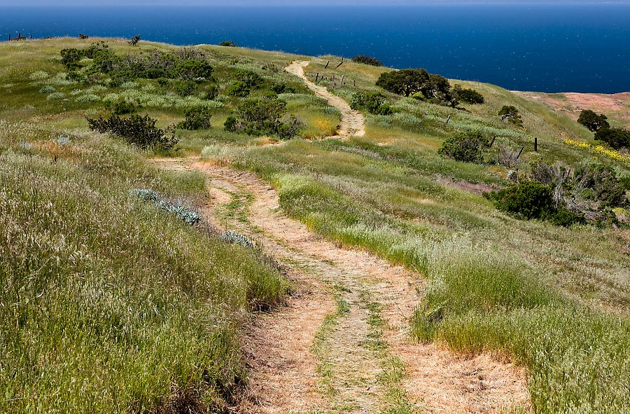 Santa Cruz Island, Channel Islands National Park.  ()