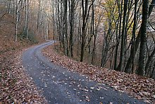 Balsam Mountain Road, Great Smoky Mountains National Park.  ( )
