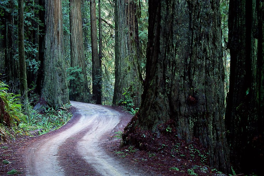 Howland Hill Road, Jedediah Smith Redwoods, Redwood National Park.  ()