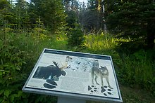 Moose and wolves. Isle Royale National Park.  ( )