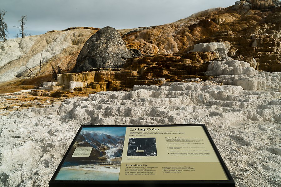 Mammoth Hot Springs. Yellowstone National Park.  ()