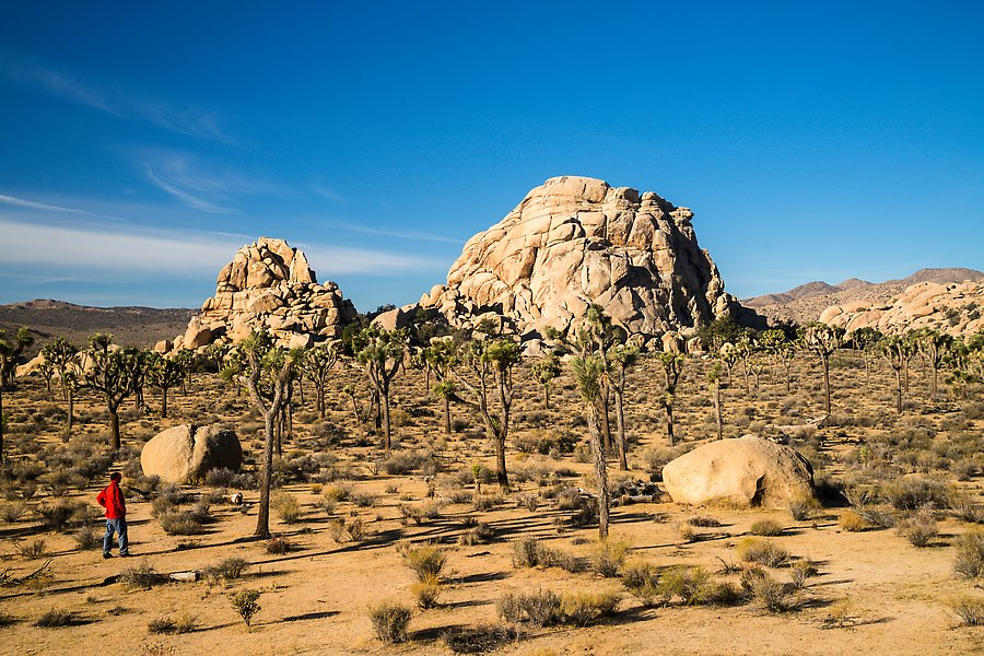 Hidden Valley area. Joshua Tree National Park.  ()
