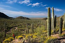 Valley View trail. Saguaro National Park.  ( )
